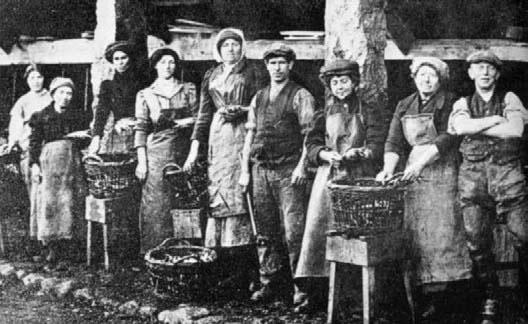 Historical image of pilchard fishermen and women