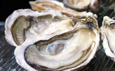 Falmouth and oysters
